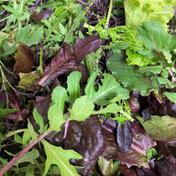 vegefulportのオリジナルリーフミックス 50g x4パック 野菜(ハーブ) 通販