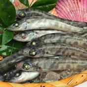 フワッ!子供から大人までが虜になるメヒカリ(中/40-60尾)×6 1パック1kg(40-60前後)×6 魚介類 通販