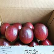 国産パッションフルーツ 2kg前後 ご家庭用 2kg 果物 通販
