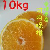 北海道向け河内晩柑10kg【訳あり】 10kg 果物(柑橘類) 通販