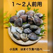 父の日 食べ比べセット はまぐり 小玉貝 1〜2人前 はまぐり 小玉貝 計1キロ 魚介類(蛤) 通販