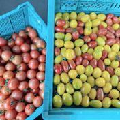 あられファーム ミニトマト、中玉トマト 2kg弱