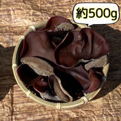 信州富士見高原産!ぷりっぷり生きくらげ 約500g 約500g 果物や野菜などのお取り寄せ宅配食材通販産地直送アウル