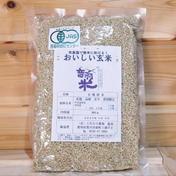 おいしい玄米 900g 愛知県 通販
