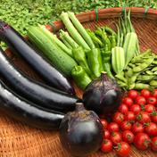 【送料無料】バーベキューに最適な旬の8種夏野菜セット【農薬不使用】 80サイズの箱いっぱいの8種類の野菜 果物や野菜などのお取り寄せ宅配食材通販産地直送アウル