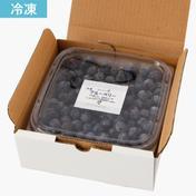 冷凍ブルーベリー(500g×2) 500g×2 果物 通販