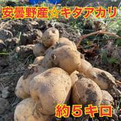 ちょっと訳あり☆サイズ混合のぐちファーム安曇野産じゃが芋キタアカリ 5Kg 野菜(じゃがいも) 通販
