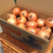 淡路島産玉ねぎ10kgM〜Lサイズ混合 M〜L10kg 果物や野菜などのお取り寄せ宅配食材通販産地直送アウル