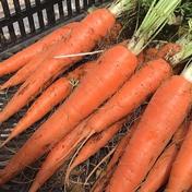 人参好き必見🥕農薬・化学肥料不使用の人参4.5kg🍀 4.5kg 大樹地農園