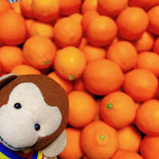 《3K》丸くて可愛い*赤レモン+おまけ 3キロ 45個程度 果物(レモン) 通販