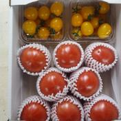 甘熟トマトセット 約2.5kg 野菜(トマト) 通販