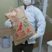 魚沼産コシヒカリ 30kg袋 新潟県 通販