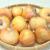戸島農園NS え? ( ゚Д゚)玉ねぎなのに果物並みの甘さ!戸島農園NS生産品の晩成玉ねぎ 晩成玉ねぎ 約1.5㎏