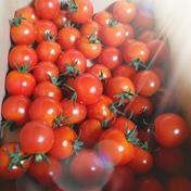 うまいべ農園 太陽のミニトマト+無料ななつぼし 1.0kg