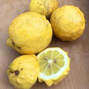 島恵自然農園 【訳あり 農薬不使用】瀬戸内レモン 3kg