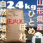 自然栽培 お米の旨味たっぷり氷温熟成 ひとめぼれ 令和2年産 山形県産 庄内産 庄内米 玄米24kg 24kg 山形県 通販