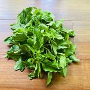 本格的なエスニック料理に欠かせないホーリーバジル ガパオ100g 100g 野菜(ハーブ) 通販