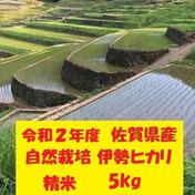 鶴ノ原北川農園の自然栽培「伊勢ヒカリ」精米 5kg 佐賀県 通販