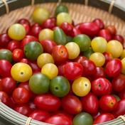 【訳あり!!】ミニトマトいろいろミックス《3.5kg》 3.5kg 果物や野菜などのお取り寄せ宅配食材通販産地直送アウル