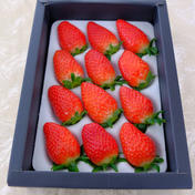特選!朝採り苺 9粒から15粒(約400g) 果物や野菜などのお取り寄せ宅配食材通販産地直送アウル