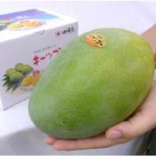 喜くばり本舗 キーツマンゴー(オーガニック)(期間限定) 1.8kg(優品大玉2玉)