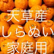 不知火 家庭用 10kg  箱込10kg  果物(柑橘類) 通販