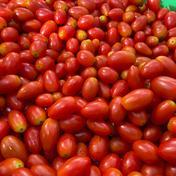 訳ありだけど美味しい!!ミニトマト(アイコ)3.5kg 3.5kg 果物や野菜などのお取り寄せ宅配食材通販産地直送アウル