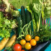 新鮮野菜のお試しセット(8品以上) 60サイズにいっぱいにしてお送り致します。 キーワード: お試し 通販
