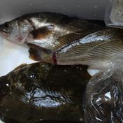 親子で捕まえた魚達セット 3~5種類(約3キロ) 熊本県 通販