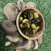 マルキュウフルーツ 間引き椎茸オリーブオイルつけ 300g