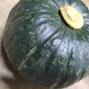 三浦産 完熟みやこかぼちゃ 4,5キロ 果物や野菜などのお取り寄せ宅配食材通販産地直送アウル