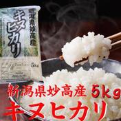 キヌヒカリ  5kg  白米  令和二年産  (送料込み) 5kg×1 新潟県 通販
