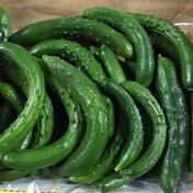規格外15kg 15kg 野菜(きゅうり) 通販