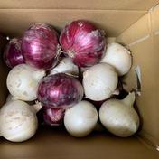 不揃い紅白セット🧅今だけの食べ比べ❗️ホワイトベアー!レッドオニオン❗️今だけの数量限定特価品 不揃い紅白3kg 兵庫県 通販