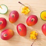 たなか果樹園 完熟マンゴー 2L 6パック 350~449g×6パック