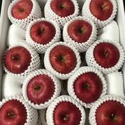 青森県産りんご「サンふじ」贈答用 約5kg 5kg 青森県 通販