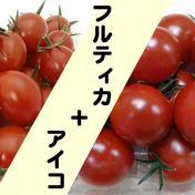 ※トマ糖※フルティカとアイコの詰合せ1kg※太陽のめぐみフルーツトマト フルティカ、アイコ各500g 山梨県 通販