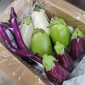 茄子食べ比べ4種 約3kg 高知県 通販