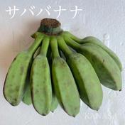 調理用バナナ1.5kg 1.5kg 沖縄県 通販