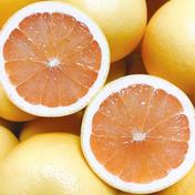 佐賀産*グレープフルーツ・さがんルビー《大箱》 7.5K 24個 果物(柑橘類) 通販