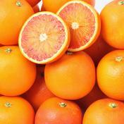濃い甘味と絶妙な酸味が大人気!高級希少品種『ブラッドオレンジ(タロッコ)』3kg(ご家庭用) 3㌔ 愛媛県 通販