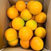 和歌山県有田産 バレンシアオレンジ 秀品 2.5kg 2.5kg 果物(柑橘類) 通販