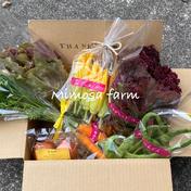 有限会社ミモザファーム 旬の野菜セットS/60サイズ『自然栽培』 旬の野菜5-6種類詰め合わせ/野菜がお好きな方1-2名が3ー4日で食べ切れる量