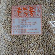 もち麦500g×3袋セット 500g×3袋 宮崎県 通販