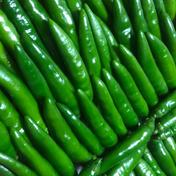 爽やかな薫りの激辛青唐辛子 1kg    1kg   熊本県 通販