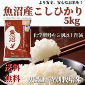 お中元 【令和2年産】 県認証 特別栽培米 魚沼産 コシヒカリ 5kg 精米 5kg キーワード: お中元 通販