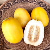マクワウリ5kg 5kg 果物や野菜などのお取り寄せ宅配食材通販産地直送アウル
