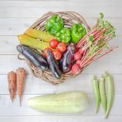 【送料込み!!自然栽培&固定種のみ】『まえむき。』の、自然と一緒に育てた旬の野菜セット6~7種類 おまかせ旬の野菜セット6~7種類 野菜 通販