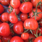 【夏ギフト】フルーツミニトマトひめトマ 6バック 約80g入り 果物や野菜などのお取り寄せ宅配食材通販産地直送アウル