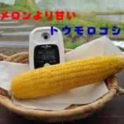 夏の恵(サニーショコラ)糖度18〜23度です。 5kg以内(13~14本) キーワード: メロン 通販